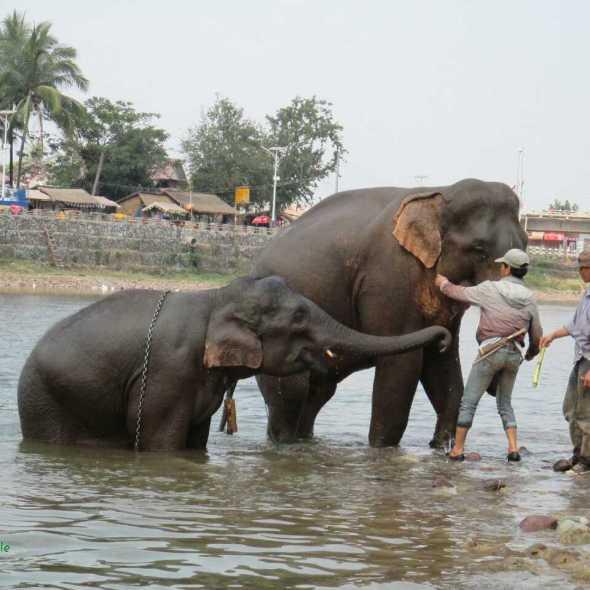 festival des éléphants