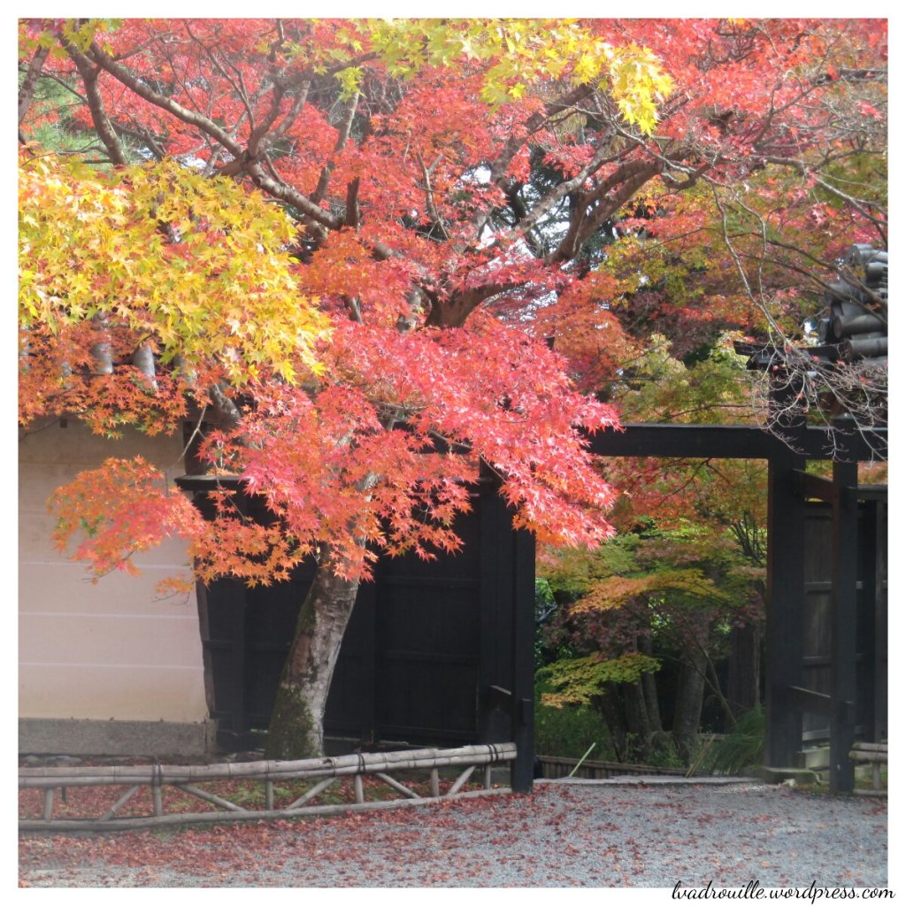 momiji à kyoto